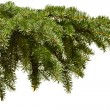 Royalty-Free Stock Photo: Fir-tree
