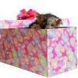 Puppy in box — Stock Photo #1016143
