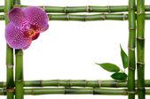 Bamboo frame — Stock Photo