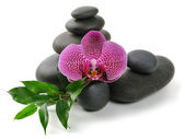 Orchidée — Photo