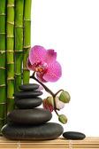 Orchidej — Stock fotografie