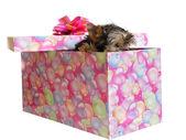Puppy in box — Stock Photo