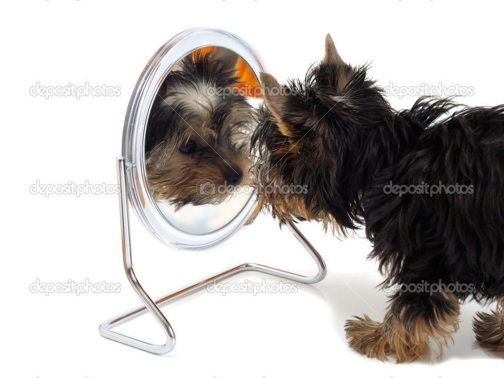 Puppy looks in the mirror — Zdjęcie stockowe #1013662