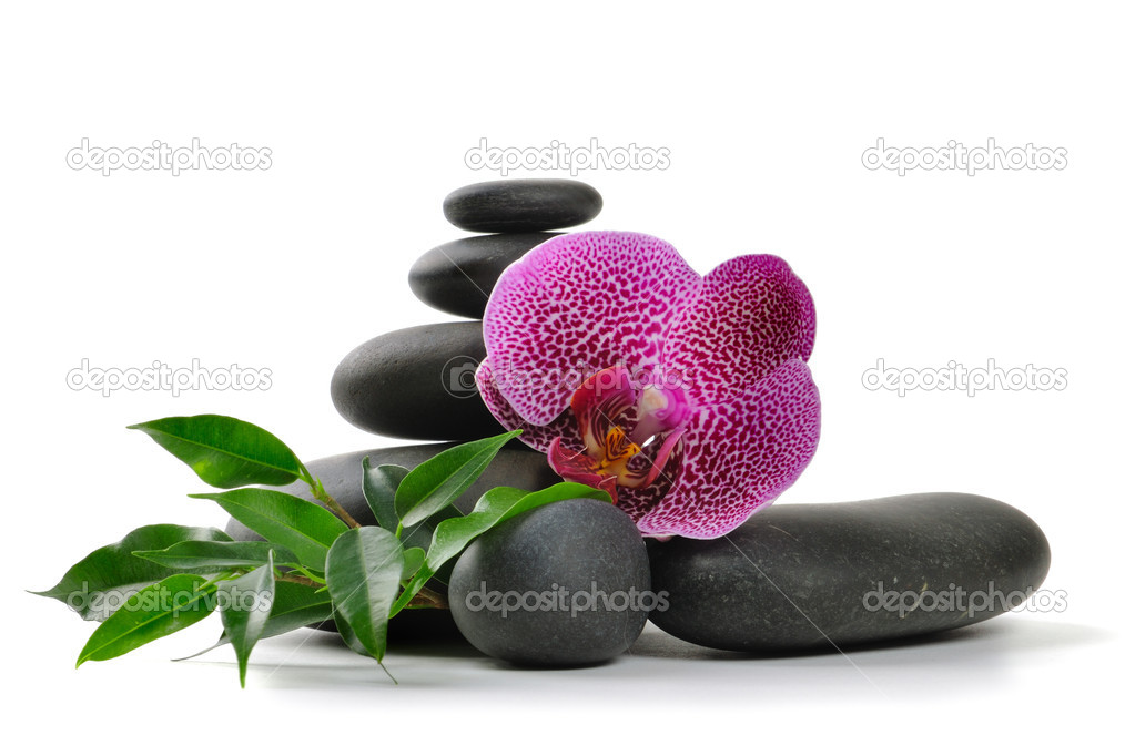 Pink orchid and stones on the white background  Stock Photo #1014499