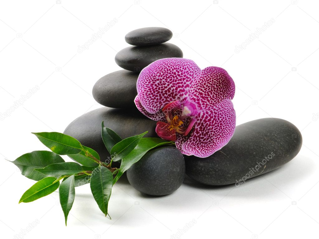 Pink orchid and stones on the white background  Photo #1014548