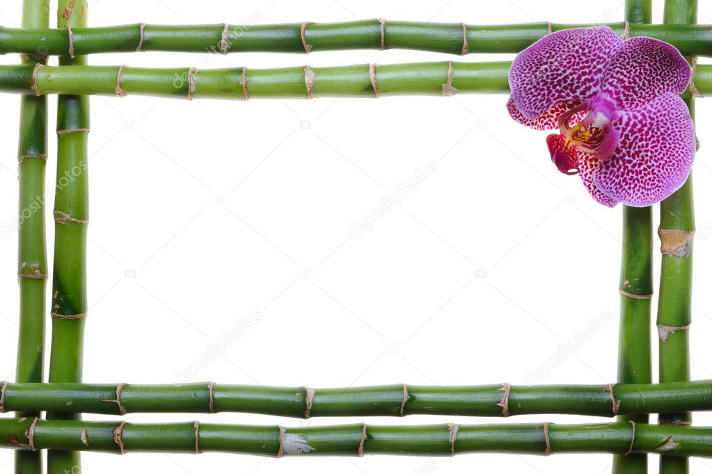 Bamboo frame and orchid on the white background  Zdjcie stockowe #1014581