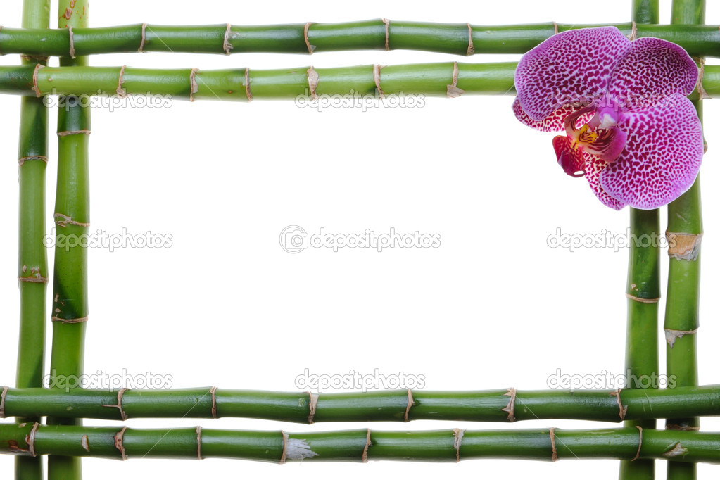 Bamboo frame and orchid on the white background  Foto Stock #1014581