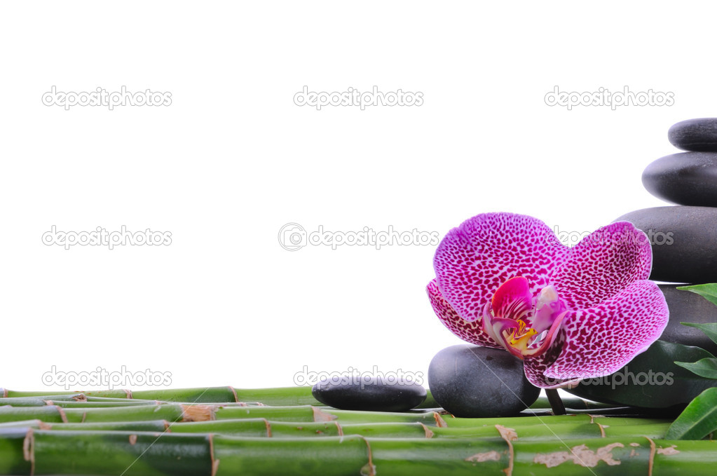 Pink orchid and stones on the white background  Stok fotoraf #1014874