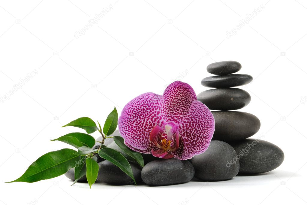 Pink orhid and stones on the white background — Stok fotoğraf #1015279