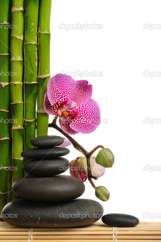 Pink orchid and stones on the white background — Zdjęcie stockowe #1015389