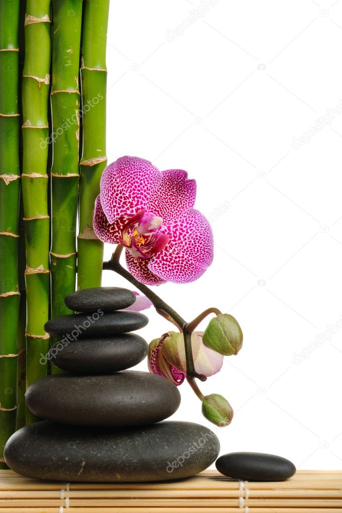 Pink orchid and stones on the white background — Stok fotoğraf #1015389