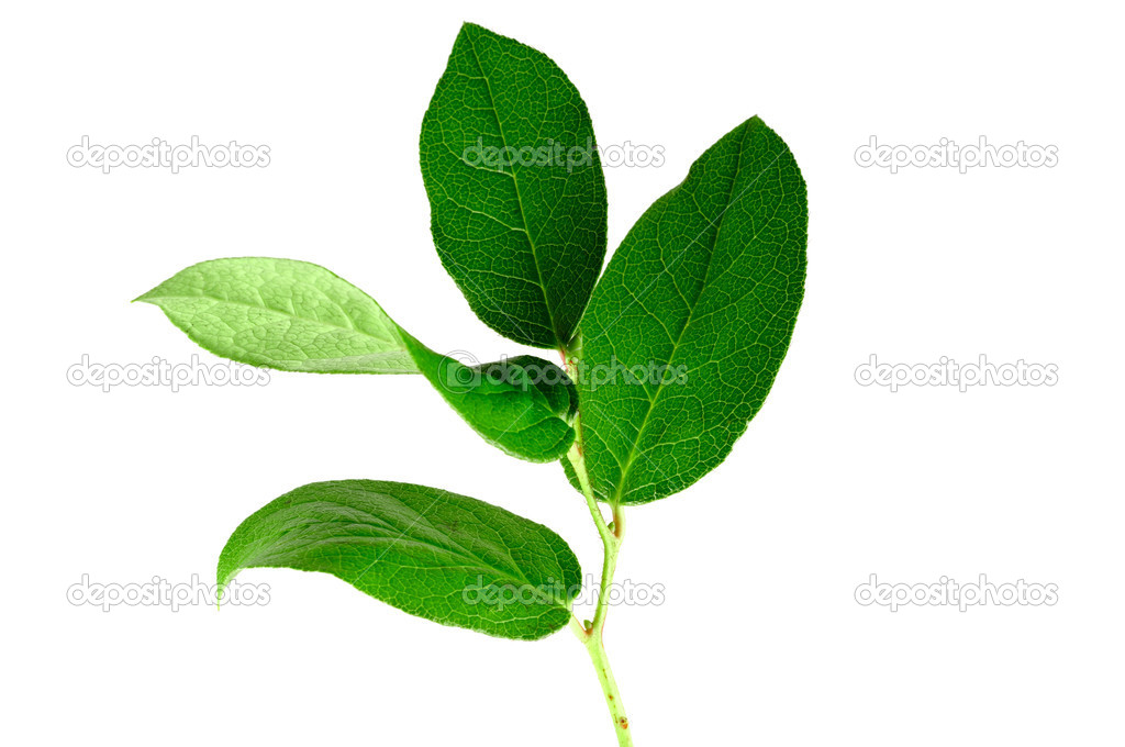 Green small plant on the white background — Stock Photo #1017687