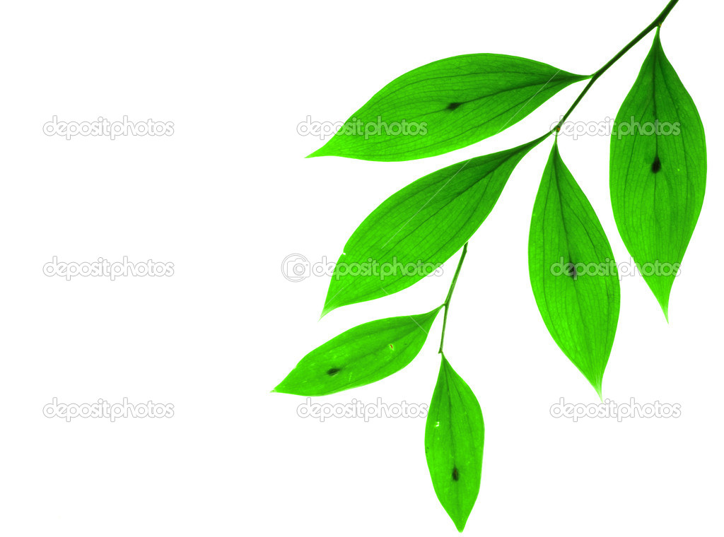 Green small leaves on the white background  Foto Stock #1017973