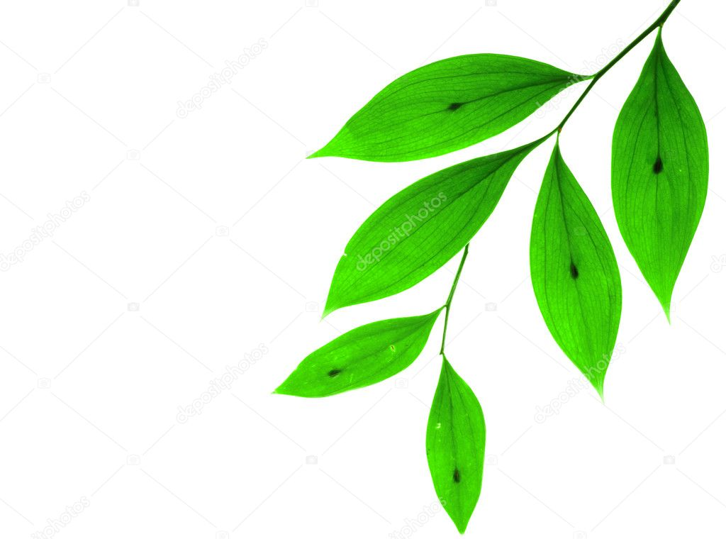 Green small leaves on the white background — Foto de Stock   #1017973