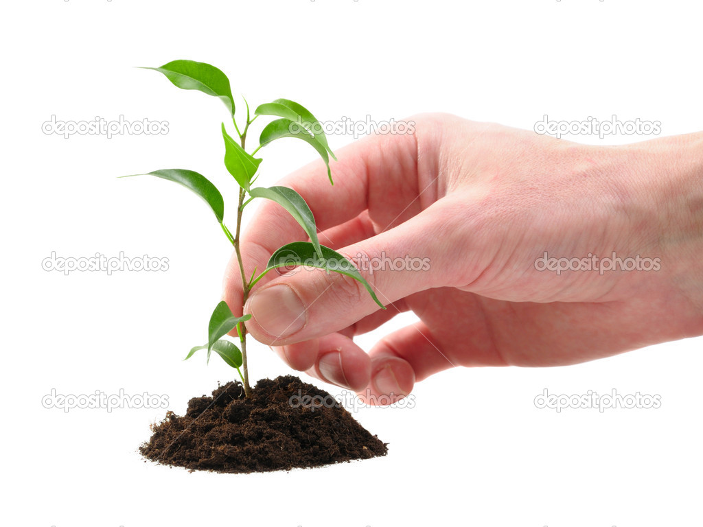 Green plant in the soil on the white background — Stockfoto #1018150