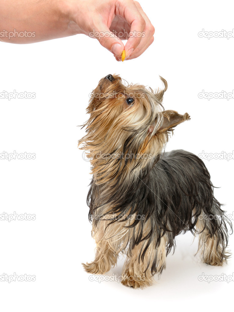 to train a dog — Stock Photo #1018752