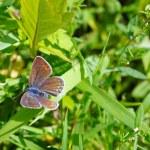 borboleta — Foto Stock