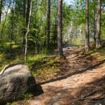 лес — Стоковое фото