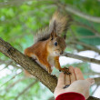 squirell — Stock Photo
