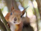 Wiewiórki opowiadajacego — Zdjęcie stockowe