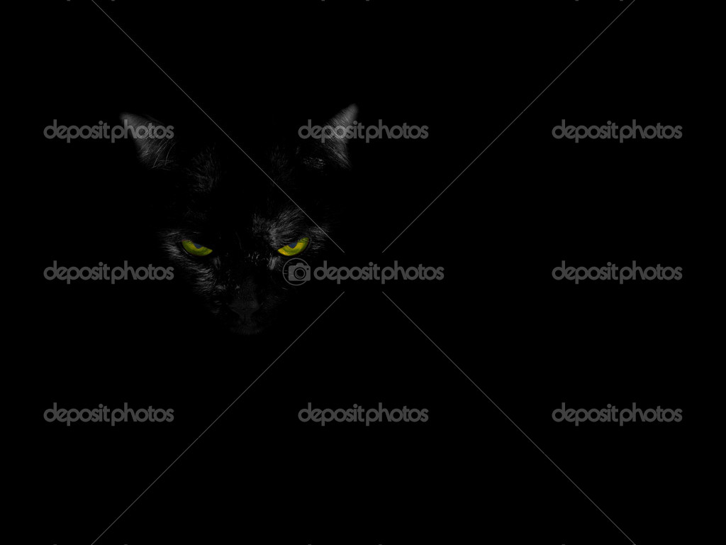 Black cat on the black background  Foto de Stock   #1038195