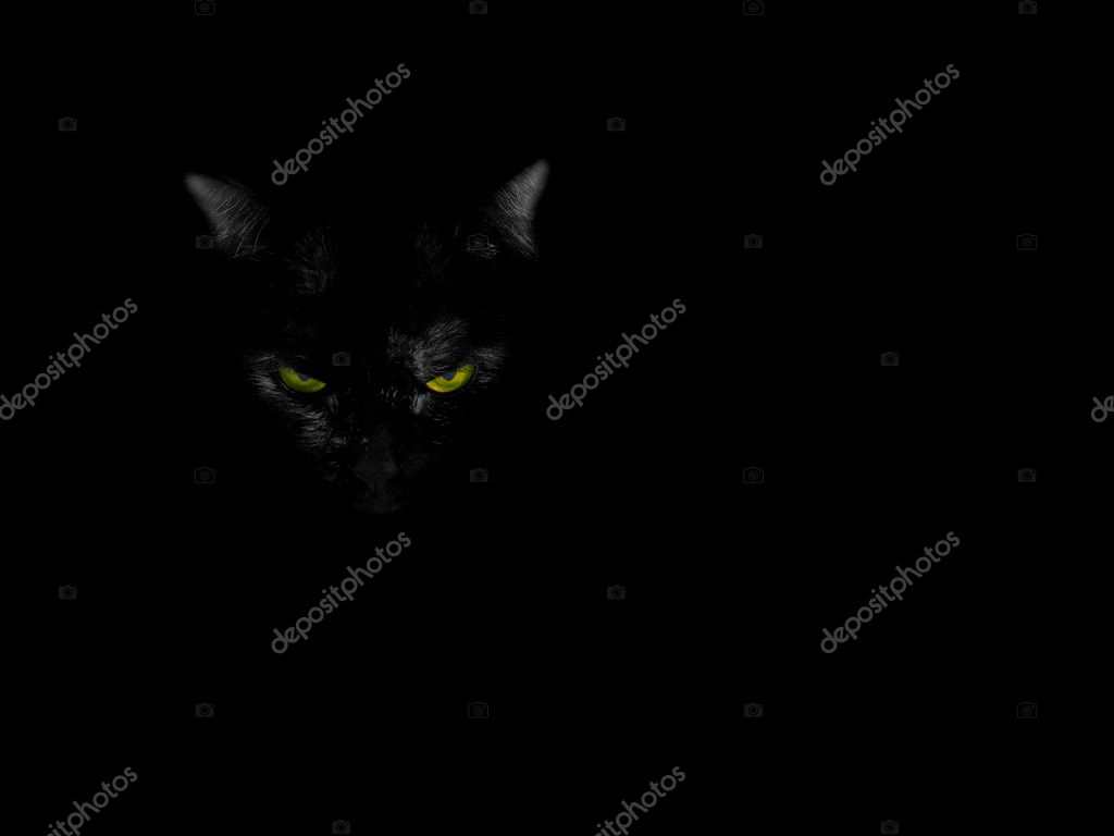 Black cat on the black background — Foto de Stock   #1038195