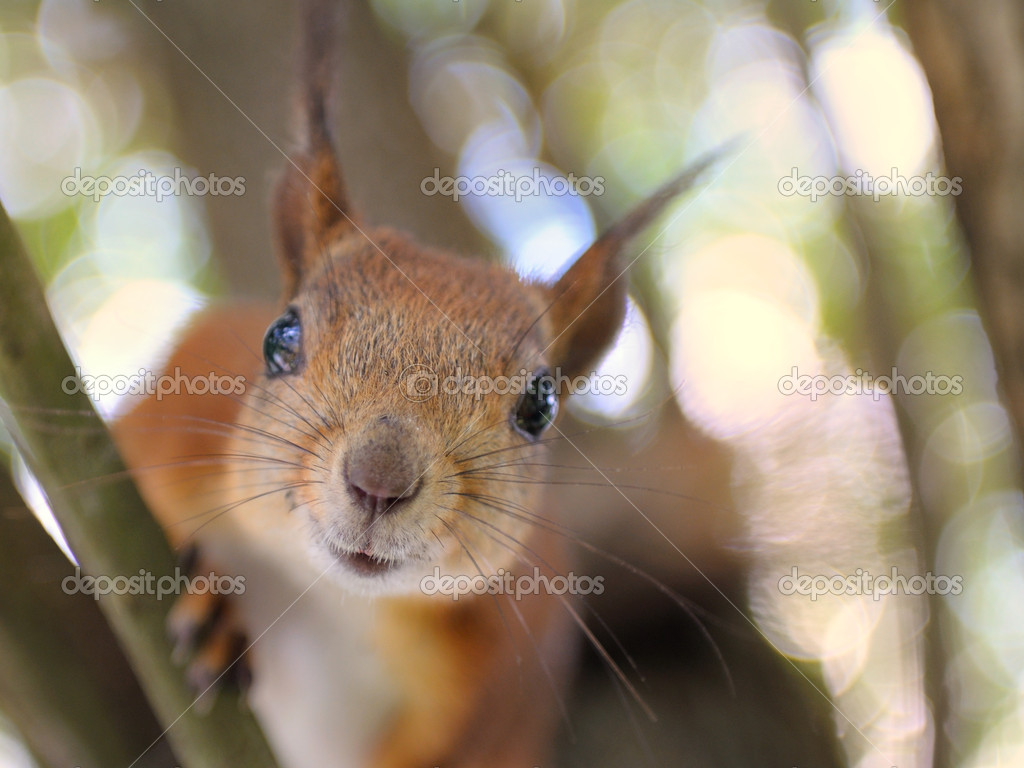 To feed a squirrel to take a nut  — Stock Photo #1038229