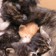 Foto Stock: Cat family