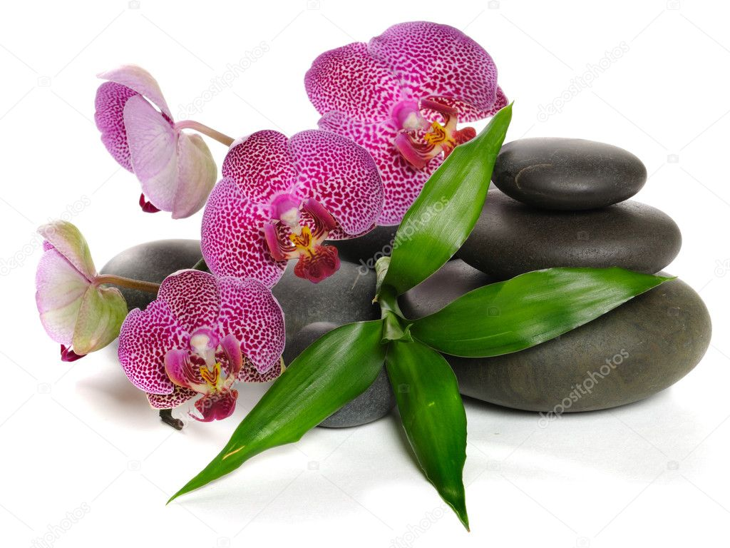 Pink orchid and stones on the white background — Zdjęcie stockowe #1096217