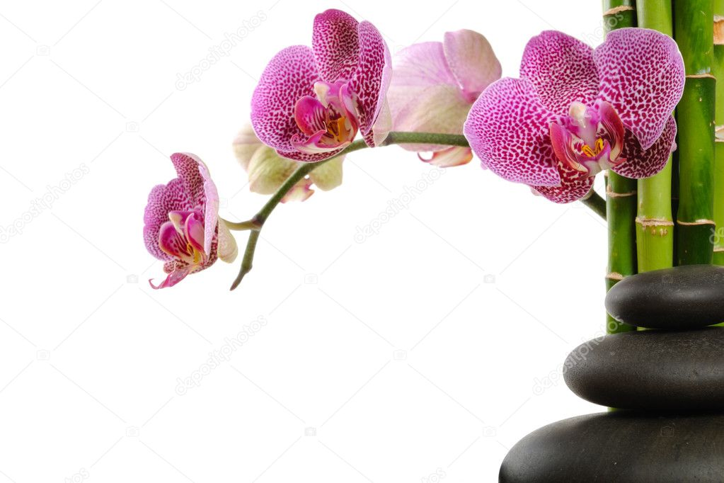 Pink orchid and stones on the white background  Photo #1096226