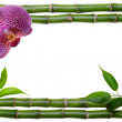 Stock Photo: Bamboo frame