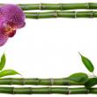 Bamboo frame — Стоковое фото