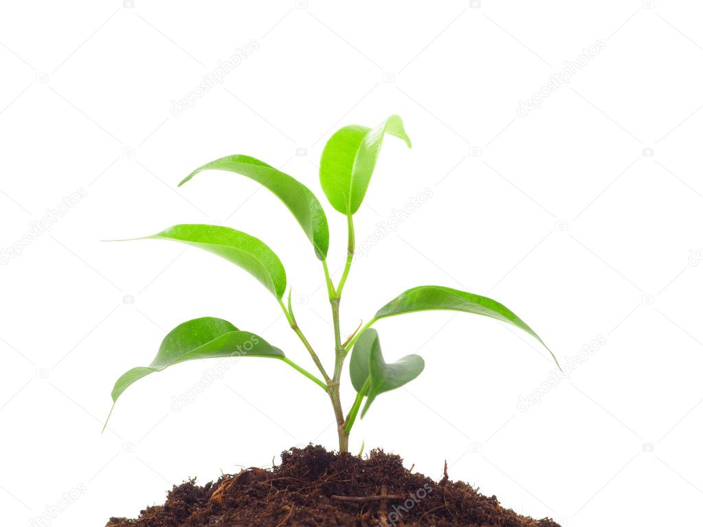 Green plant in the soil on the white background — Стоковая фотография #1883750
