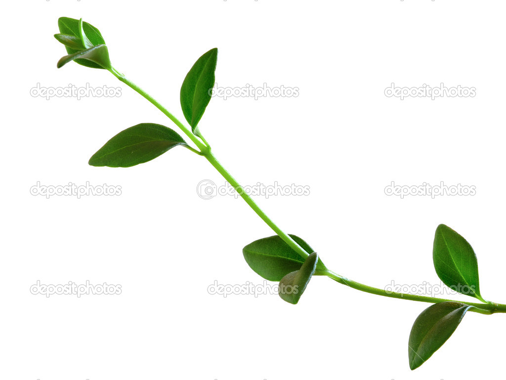 Green small plant on the white background  Foto de Stock   #2167592