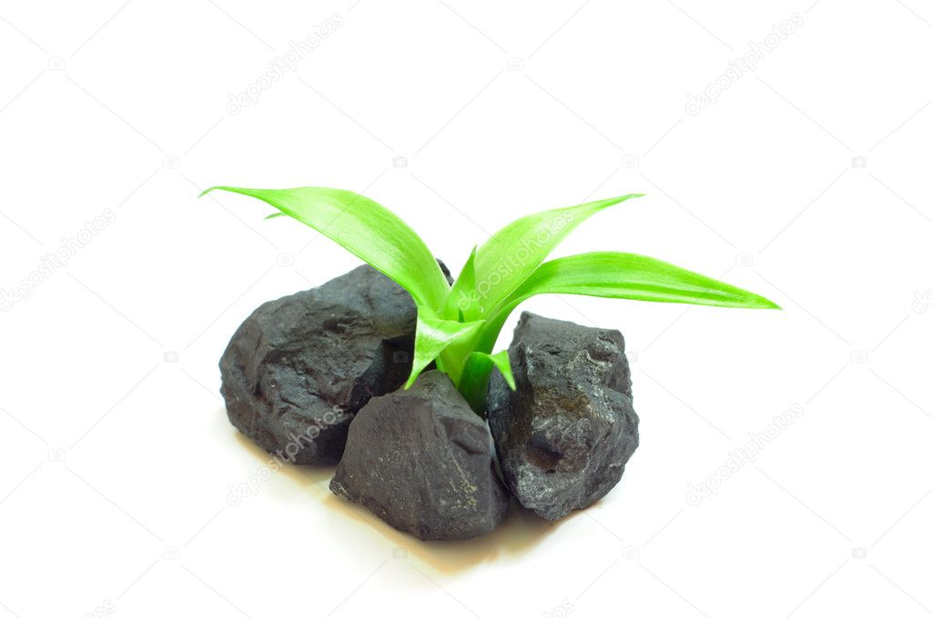 Green plant in the soil on the white background — Foto Stock #2212197