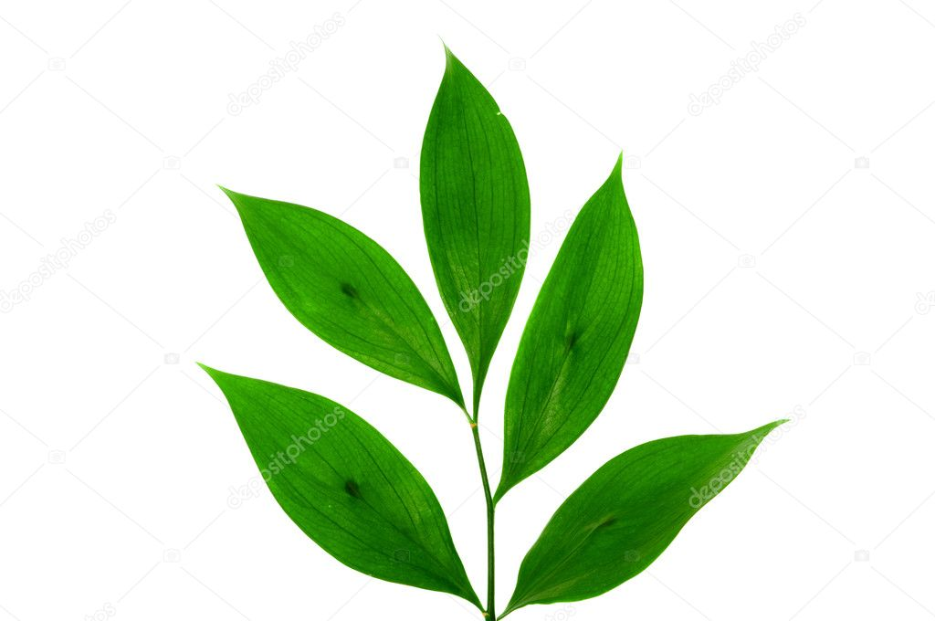 Green small plant on the white background — Stock Photo #2212279