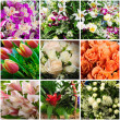 Foto de Stock  : Flowers collage
