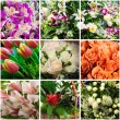 Foto Stock: Flowers collage