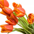 Bouquet of the fresh tulips — Stock Photo #1080508