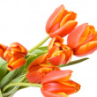 Bouquet of the fresh tulips - Stock Photo