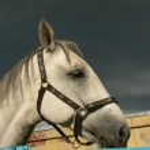 Horse — Stock Photo #1028242