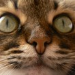 Feline nose — Stock Photo