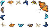 Butterfly collection — Stock Photo