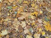 Autumn sheet — Stock Photo