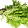 Stock Photo: Green lettuce