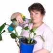 Woman fertilize flower — Stock Photo #1080603