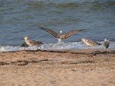 Seagull on seacoast — Stock Photo
