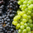 Grapes — Stock Photo #1100857