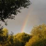 Rainbow — Stock Photo #1321581