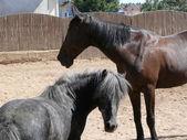 Horse and pony — Stock Photo